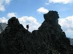 hrebenovka-osarpance-vysoka-tazky-stit